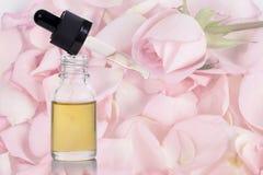 Petali del fiore della rosa di rosa ed olio essenziale Immagini Stock Libere da Diritti