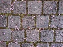 Petali del fiore su pavimentazione Immagine Stock