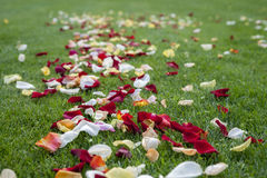 Petali del fiore sull'erba Fotografie Stock