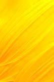 Petali del girasole Immagini Stock