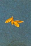 Petali del girasole Fotografia Stock