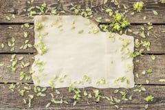 Petali del luppolo intorno ad un foglio di vecchia carta immagine stock