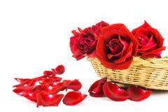 Petali delle rose rosse su un fondo bianco Fotografie Stock Libere da Diritti