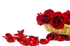 Petali delle rose rosse su un fondo bianco Immagini Stock
