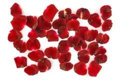 Petali delle rose rosse su un fondo bianco Immagini Stock Libere da Diritti