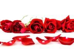 Petali delle rose rosse su un fondo bianco Immagine Stock