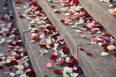 Petali di cerimonia nuziale Fotografie Stock Libere da Diritti