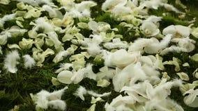 Petali di nozze sull'erba stock footage
