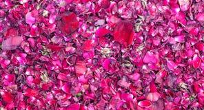 petali di rosa Immagine Stock Libera da Diritti
