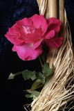 petali di rosa Fotografia Stock Libera da Diritti