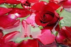 Petali di rosa di galleggiamento 3 Fotografia Stock