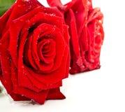 Petali di rosa rossa in segno di amore Fotografia Stock