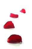 Petali di rosa rossi come i precedenti fotografia stock libera da diritti