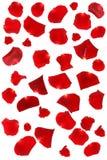 Petali di Rosa rossi isolati Fotografia Stock Libera da Diritti
