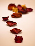Petali di rosa secchi Immagini Stock