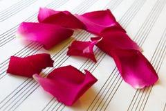 Petali di Rosa su musica di foglio bianco Immagine Stock