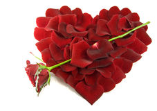 Petali di Rosa in una figura di un cuore Fotografia Stock Libera da Diritti