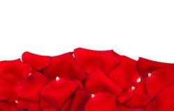 petali di rose rossi Fotografie Stock Libere da Diritti