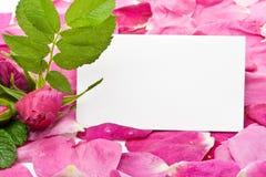 Petali e scheda in bianco Fotografia Stock
