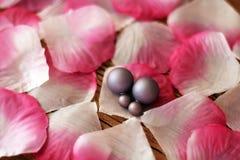 Petali ed orecchini rosa Immagine Stock