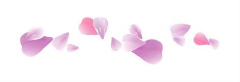 Petali porpora rosa-chiaro volanti isolati su fondo bianco Petali di rose Fiori di caduta della ciliegia Cmyk di vettore ENV 10 Fotografie Stock