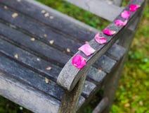 petali rosa del banco romantico Fotografie Stock Libere da Diritti