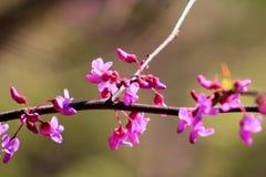 Petali rosa semplici fotografia stock