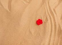 Petali rossi del fiore sulla sabbia Fotografie Stock