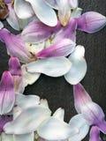 Petali su calcestruzzo Fotografia Stock