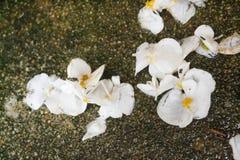 Petali su terra immagini stock