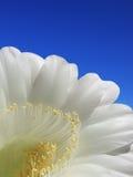 Petalo del fiore Immagini Stock Libere da Diritti