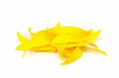 Petalo del fiore di Sun Fotografie Stock Libere da Diritti
