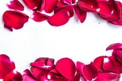 Petalo di Rosa Fotografia Stock Libera da Diritti