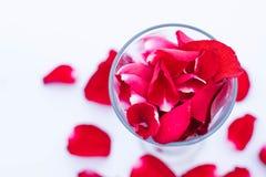Petalo di rosa rossa di bellezza nel vetro e nella terra Immagine Stock