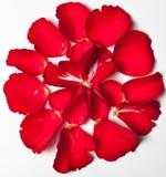 Petalo di Rosa rosso Fotografia Stock Libera da Diritti