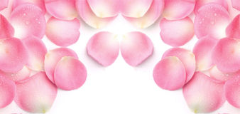 Petalo Rose Background Fotografia Stock