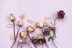 Petalo secco Rosa Immagini Stock