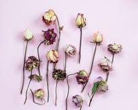 Petalo secco Rosa Fotografia Stock