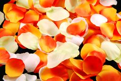 Petals. White and orange petals on black Royalty Free Stock Images