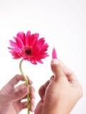 petals Arkivbild