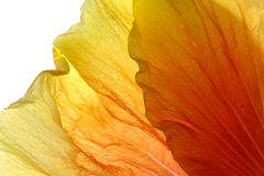 Petals Stock Photography