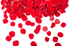 Petals. Falling red rose petals isolated Royalty Free Stock Photography