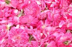 Petals Stock Image