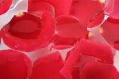 Petals Stock Images
