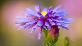 petals Royaltyfri Fotografi