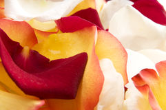 Petals. Stock Photography