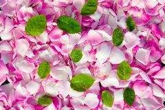 Petals Royalty Free Stock Image