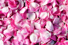 Petals Royalty Free Stock Photos