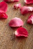 Petals av en rose royaltyfria bilder