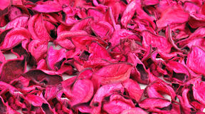 Petals background. Royalty Free Stock Photo